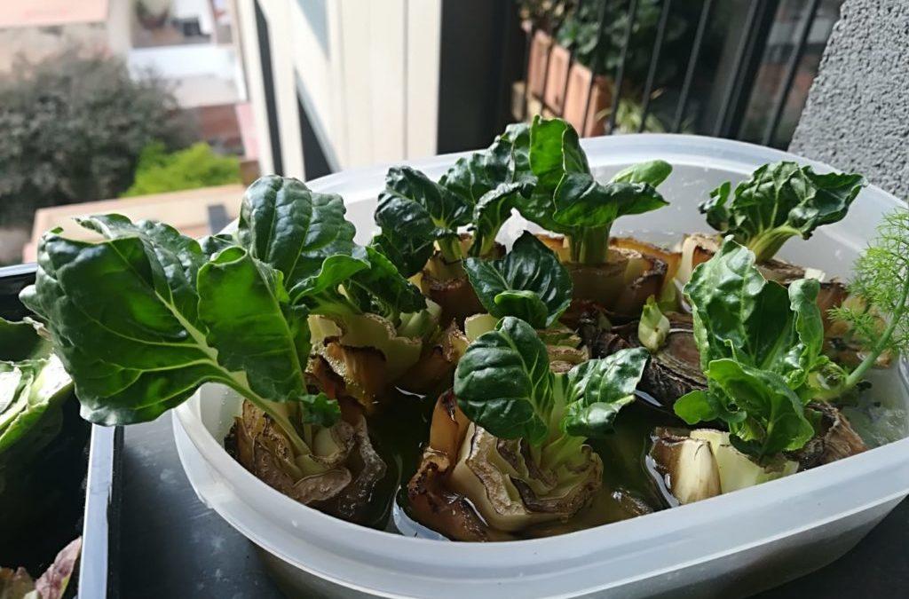 Cultivar verduras